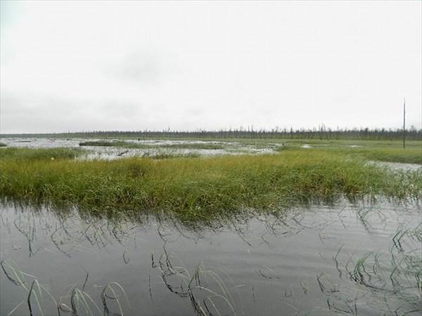Плавающее болото