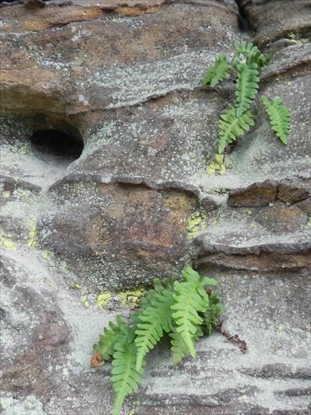 Песчаник, железо, растение