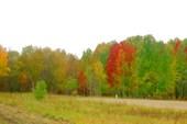 Осень вступает в права.