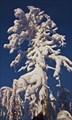 Высохшее дерево, под воздействием холода и ветра...