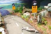 Соблюдайте скоростной режим в Австралии!