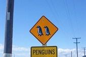 Осторожно! Пингвины!