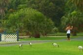 Птицы в парках