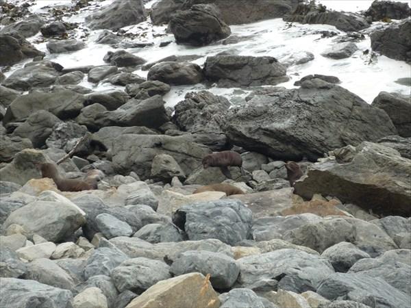 Шифрующиеся морские котики