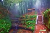 Бамбуковое море