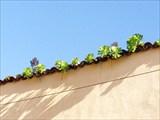 Эндемики на крыше
