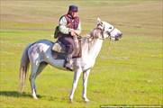 Киргиз-чабан