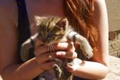 Замучить котят-котяточек!