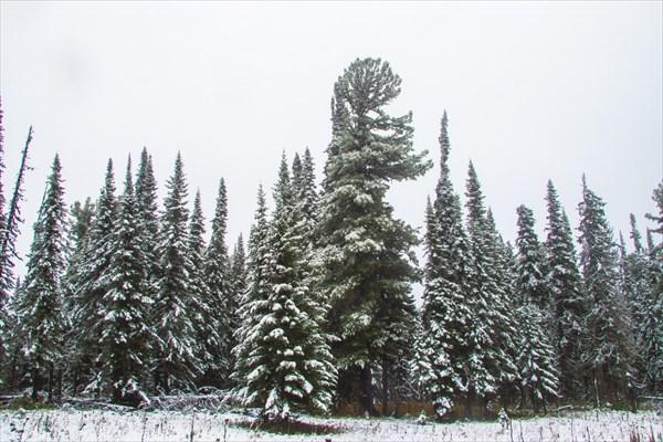 Снег в сентябре