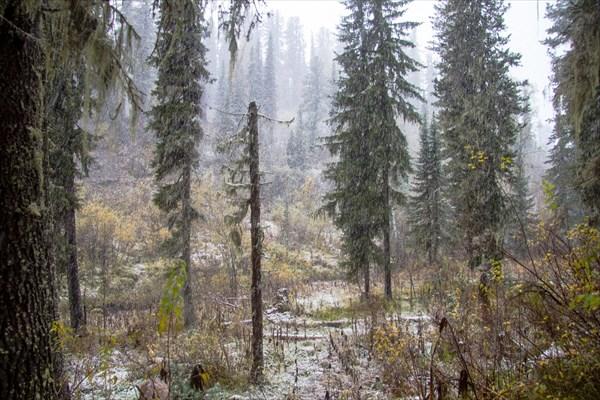Второй снег сентября