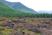 Вырубки в долине Кунйока