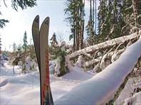 лес и лыжи