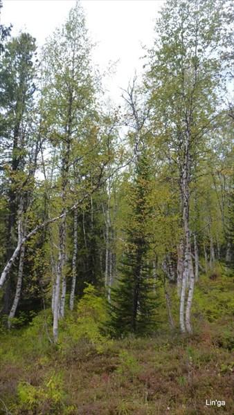 Лес вдоль реки Верхняя Буйба