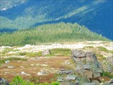 Хр. Метугул-Тайга, спуск в дол.р. Малый Тайгиш  с пер. Туманный