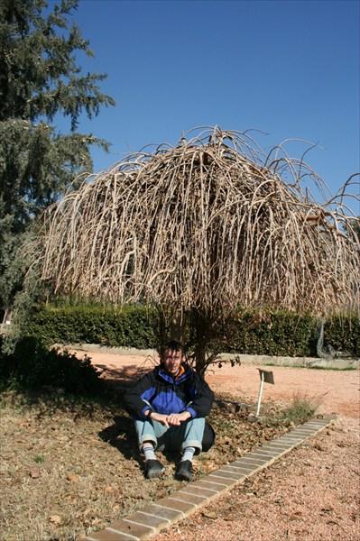 Под сенью веселого дерева