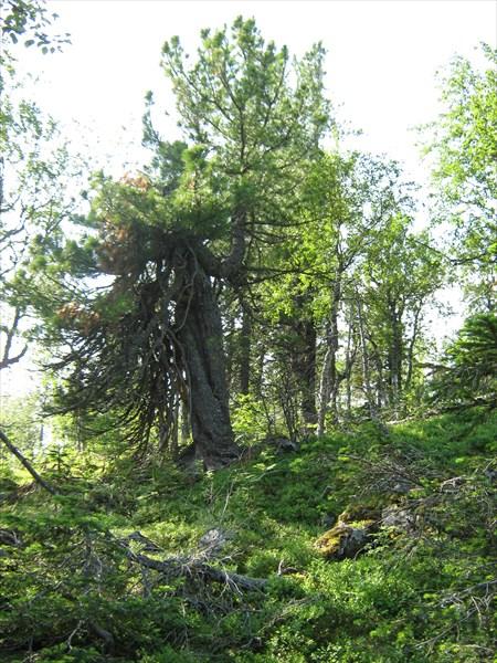 Граница леса.