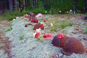 Фото. 88. Кладбища Колласъярви. Каски красноармейцев.