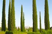 Кипарисовая аллея (городской парк)