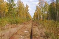 Осень в Шатурских лесах (С) Вишняков Александр