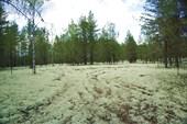 День 2: весь лес в белом мху