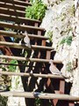 Турецкие голуби