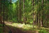 Остатки дороги в лесу