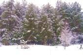 Снегопад все усиливался