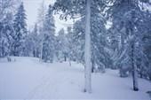Снега здесь много.