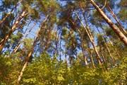 Алешкинский лес (2017)