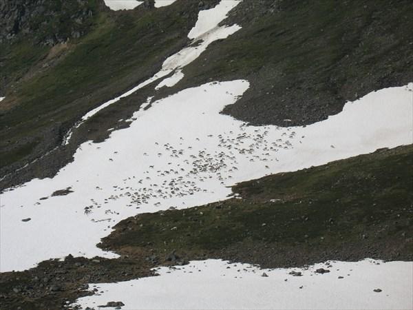 Олени на снегу