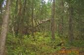 Лес у подножья г.Иремель