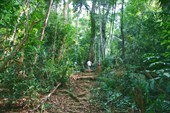 джунгли Тиомана