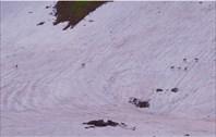 Сокжои - дикий горный олень