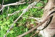 Неизвестное гнездо