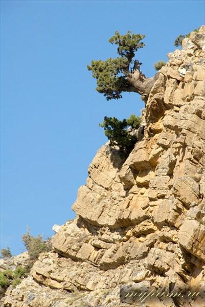 Изометричное дерево