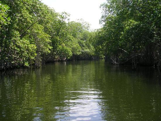 The-black-river