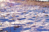 Переливающийся на рассвете снег