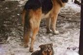 Собаки во дворе кафе