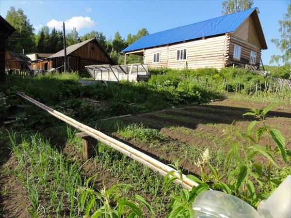 Желобок проложен от ручья по всему огороду.