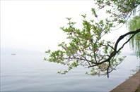 Ветвь над водой