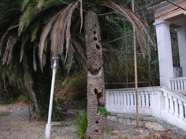 Дырявая пальма