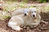 Ника и Олли. Гнездование