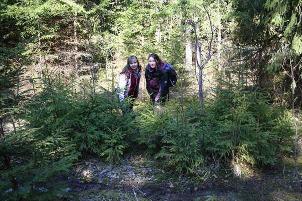 Девушки в елочках
