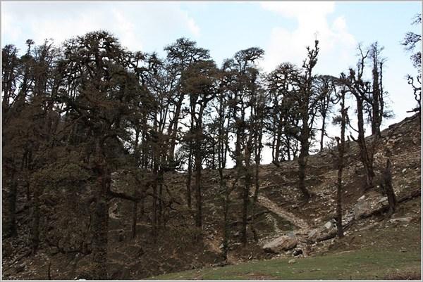 Перевал в долину р. Бхилха-Ганга