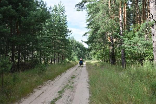 .Лесные дорожки