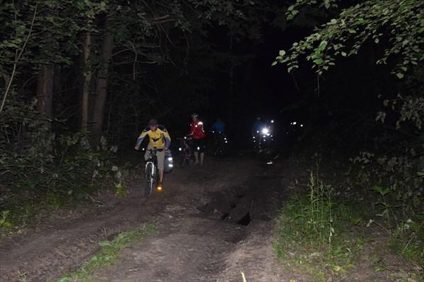 Дорога через ночной лес