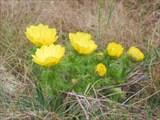 растительность Караби