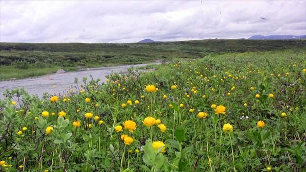 Цветущая долина Талбейяхи.