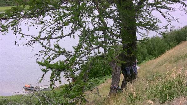 Священное дерево. Место поклонения.