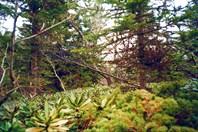 Экспедиция на хр.Дженту, Май 2001. (c)